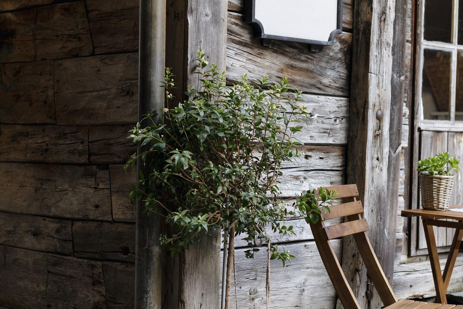 domy drewniane w stylu rustykalnym