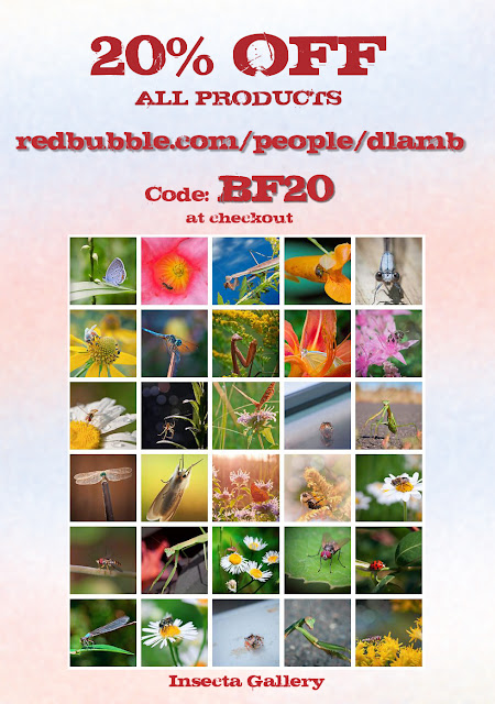 http://www.redbubble.com/people/dlamb/collections/151628-insecta