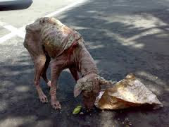 perro callejero con sarna
