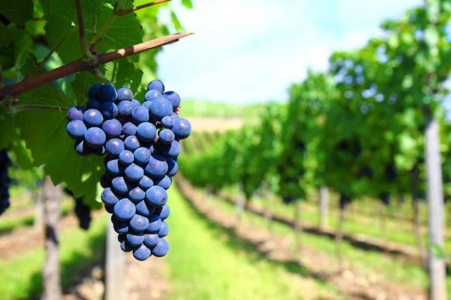 Arte del buen vino