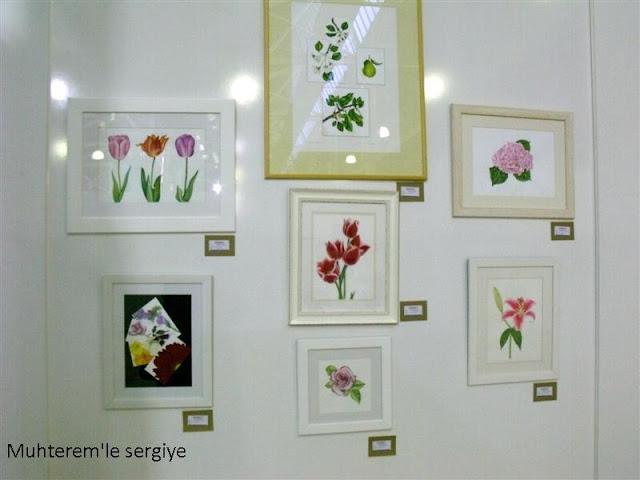 scientific plant drawing
