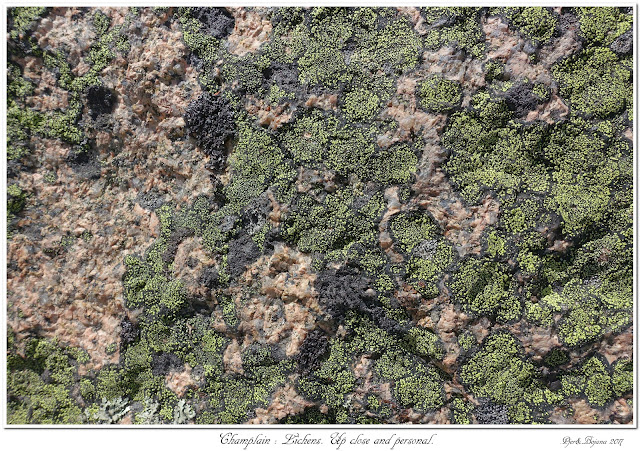 Champlain: Lichens. Up close and personal.