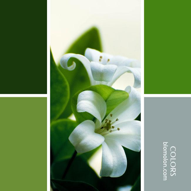variedad_en_color_combinacion_13