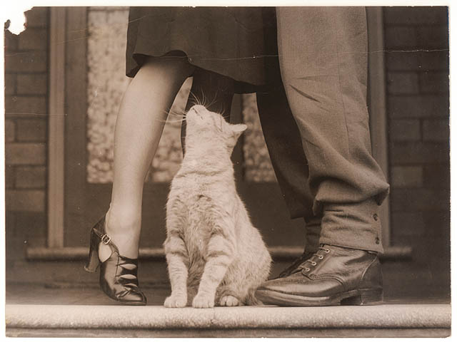 Soldier's goodbye and Bobbie the cat, between 1939-1945, by Sam Hood. From the collection of the State Library of New South Wales.