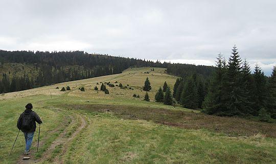 Hala Długa, zejście z Czoła Turbacza.
