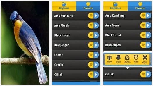 aplikasi android memaster burung