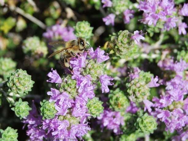Πωλούνται 18 δοχεία μέλι θυμαριού στην Κρήτη