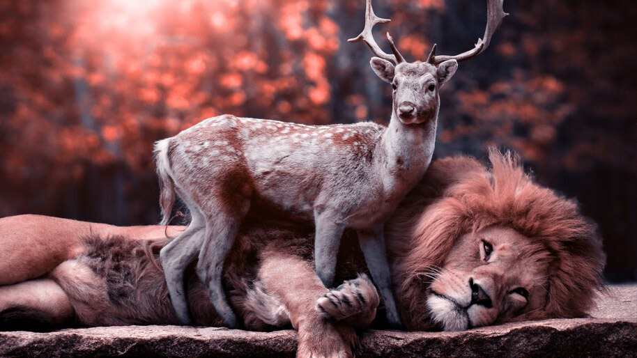 Lion, Deer, Animals, 8K, #4.548