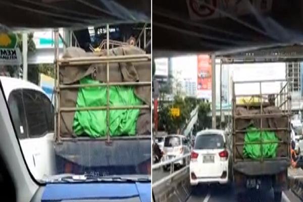 Egonya Tinggi dan Tak Mau Ngalah Mobilio vs Truk ini Saling Sikut di Pintu Tol