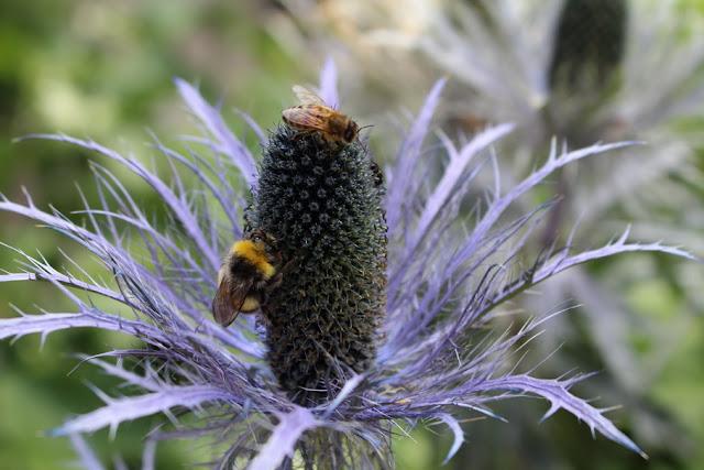 studiare gli insetti homeschooling