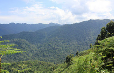 5 OTHER ACTIVITIES DONE IN BWINDI IMPENETRABLE NATIONAL PARK BESIDES GORILLA TREKKING.