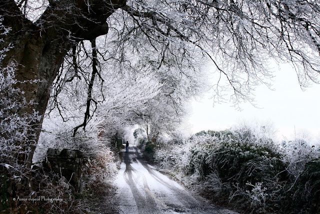 frost and snow on a country road