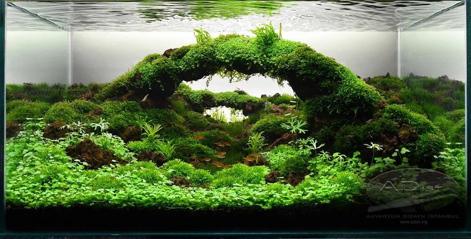 bể thủy sinh cầu vòng chơi rêu
