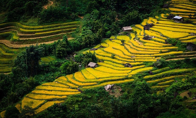 Hoang Su Phi terraced fields - new national heritage of Vietnam 3