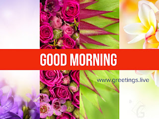 Multi Flowers and Multi colour combinations unique good morning Greetings collection. It feels you cool..