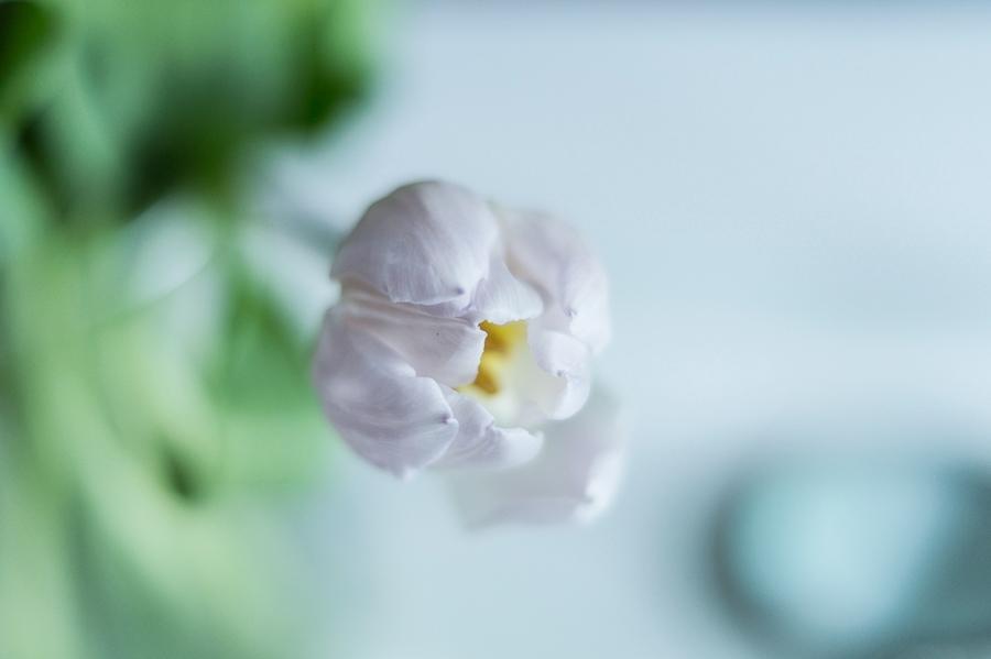 Blog + Fotografie by it's me! | fim.works | blassrosa Tulpenblüte