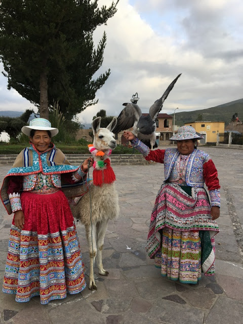 women in traditional dress with llama and tame hawk, Maca, Peru