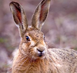 Funny Joke - Dead Rabbit Image