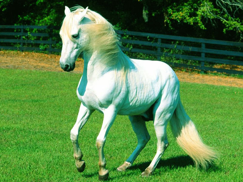 Best Hd Wallpapers For Ipad White Horse Wallpaper