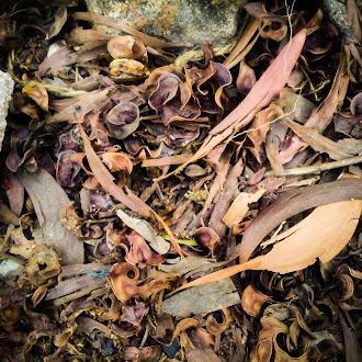 Wood   dry leaf