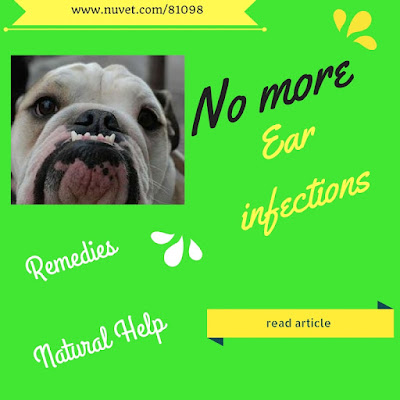 Holistic Remedy For Ear Infection In Dogs