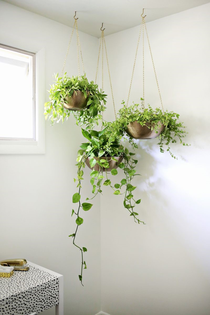 10 Of The Best Hanging Houseplants Part 8