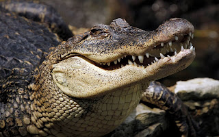 Three Crocodiles attack pastor and eat him