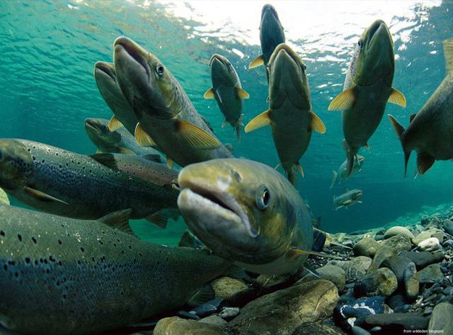 Chuyện 3 con cá: Đọc và ngẫm, nhiều người trong chúng ta sẽ thấy ngậm ngùi
