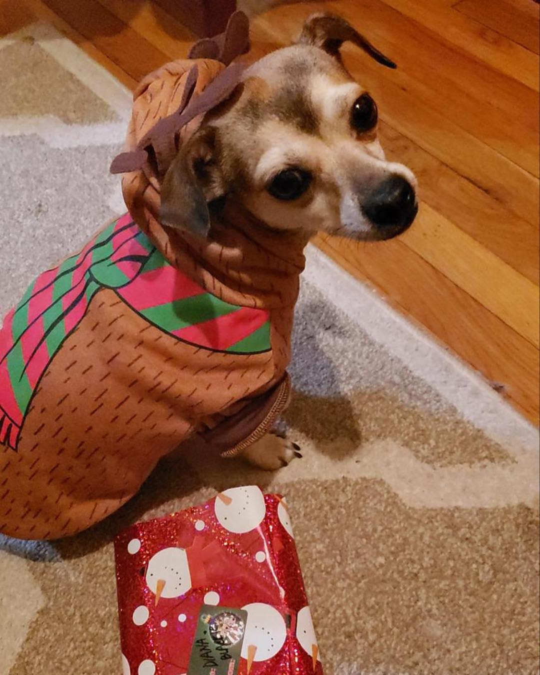priyanka chopra dog jacket price