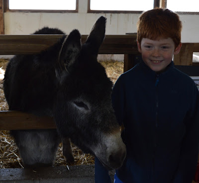 Tattershall Farm Park - A review - donkey