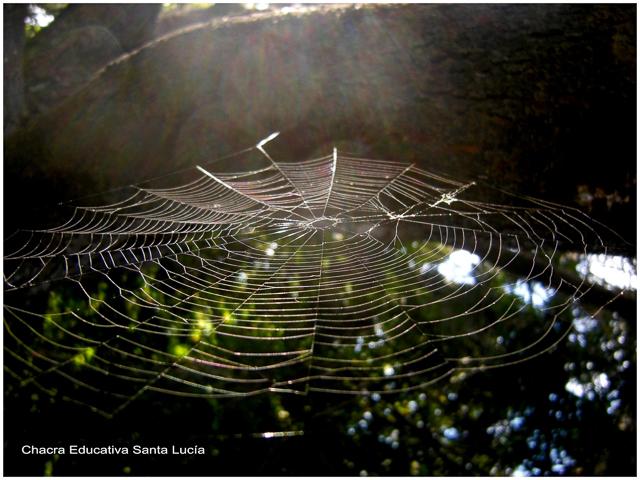 Tela de araña - Foto: Marcos L para Chacra Educativa Santa Lucía