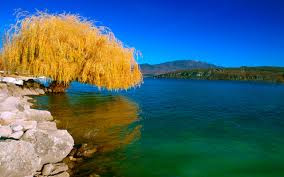 Beautiful Tree And Lake Wallpapers