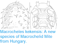 https://sciencythoughts.blogspot.com/2018/06/macrocheles-kekensis-new-species-of.html