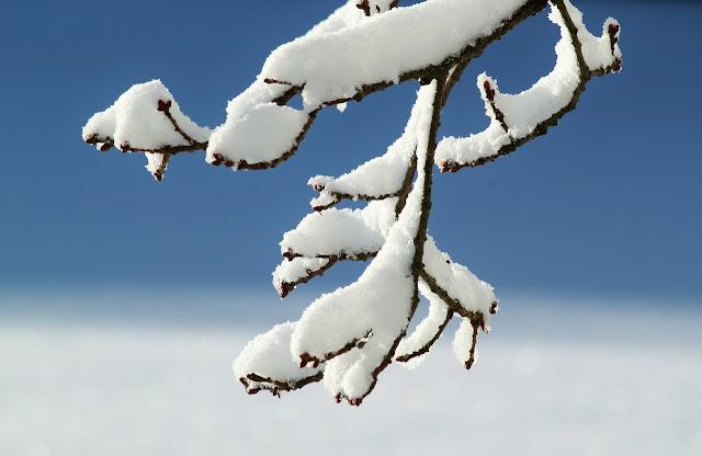 トロント 冬