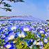 Fascinantes campos azules, no son de otro planeta son de aquí de la Tierra