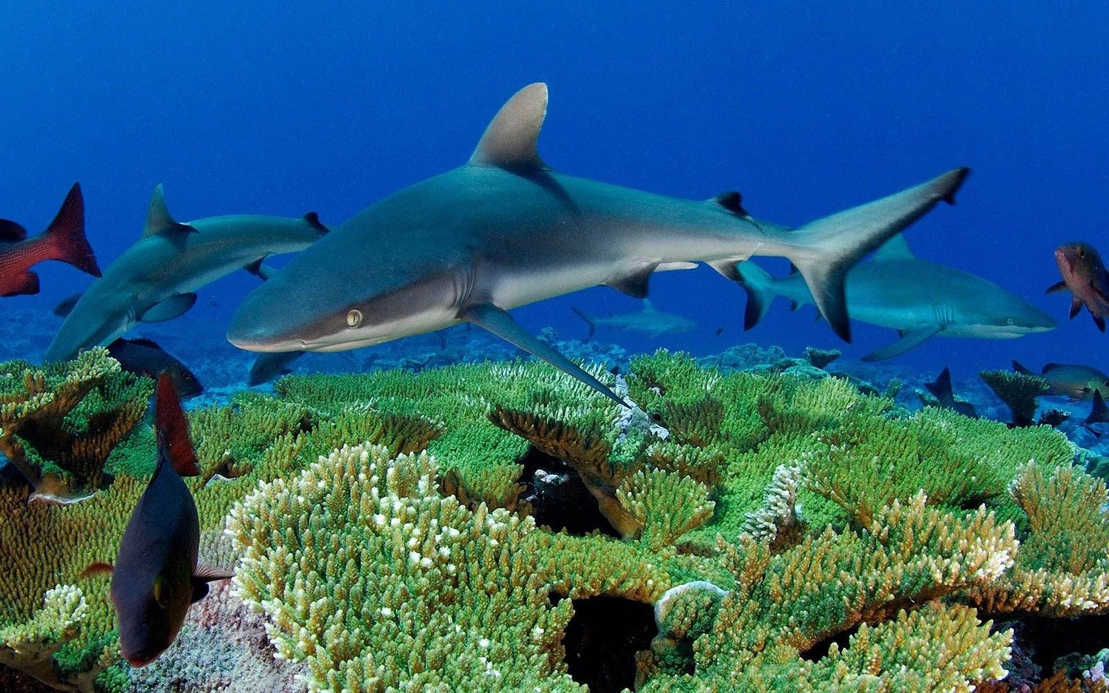download wallpaper shark 1600 - photo #41
