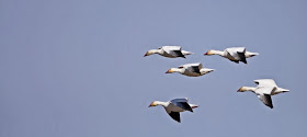 Prairie Ice: Counting Birds - James Harrison