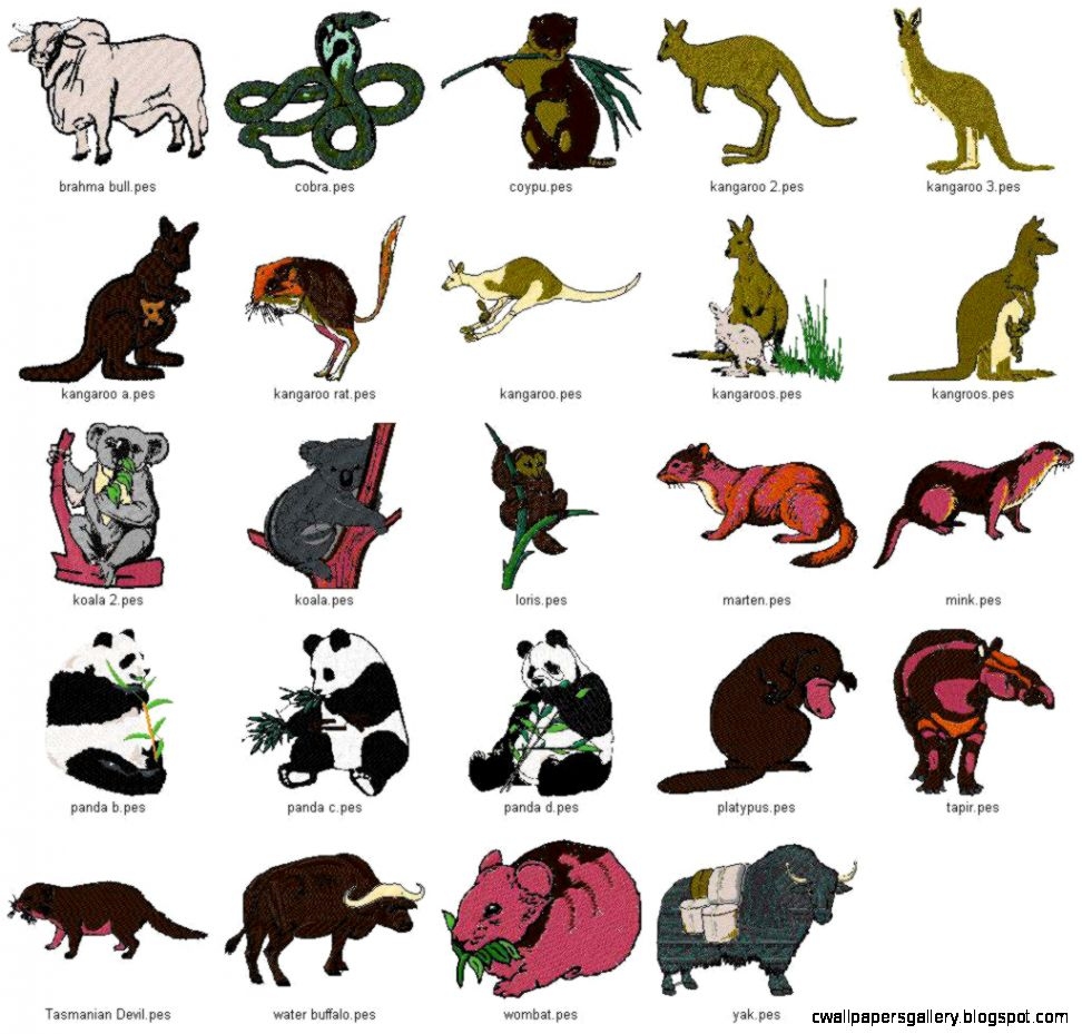 Rain Forest Animals List | Wallpapers Gallery