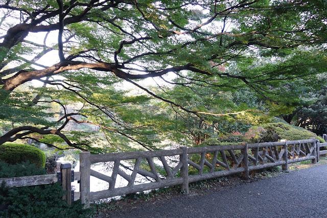 Tokyo Travel: Shinjuku Gyoen