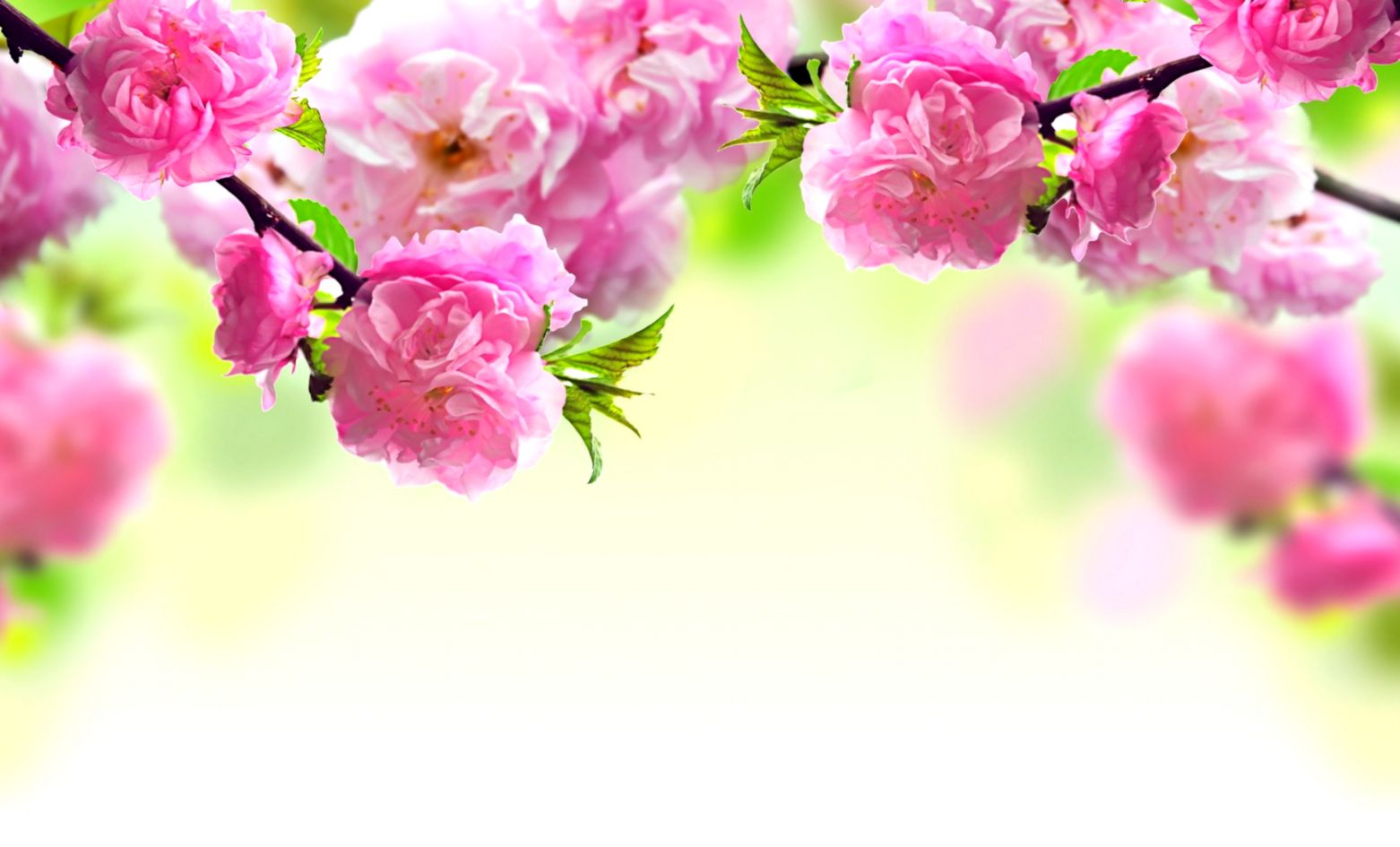 Branches Flowers Pink Hd Wallpaper Soft Wallpapers