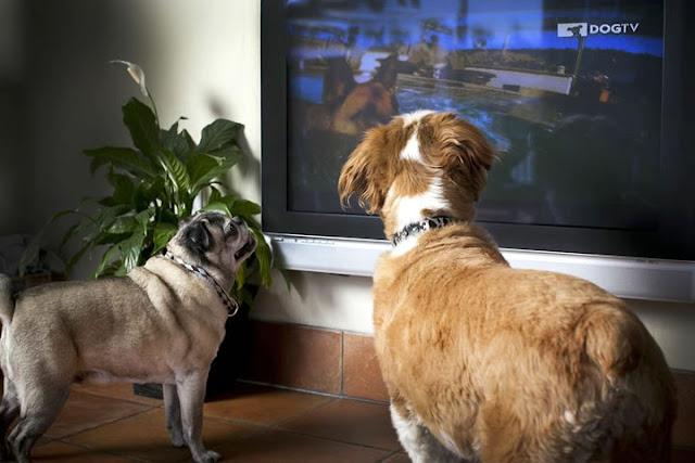 Tem cachorro? Existe um canal de TV só para entreter os cães (Foto:Reprodução/Facebook)