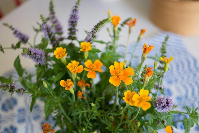 blommor från mina odlingslådor