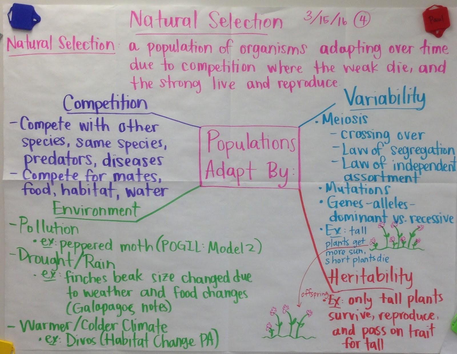 Natural Selection Ap Biology Notes