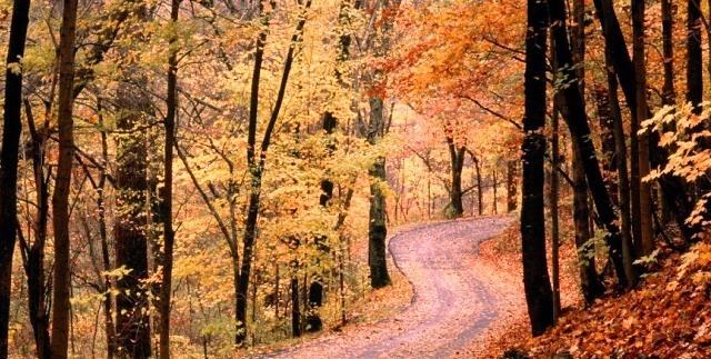 Ağaçlar Yol Yapraklar