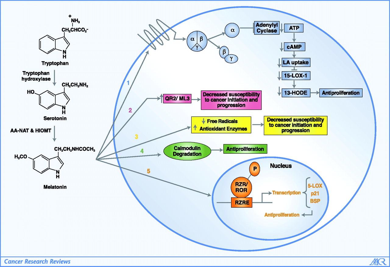 sleep mechanism Sleep mechanism: 3 phrases in 2 subjects.