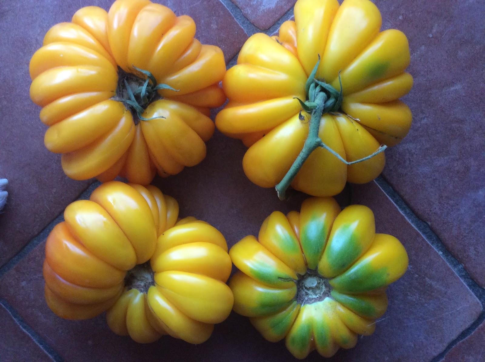 Tree and Twig Farm Blog: Orange and Yellow Tomatoes 2017