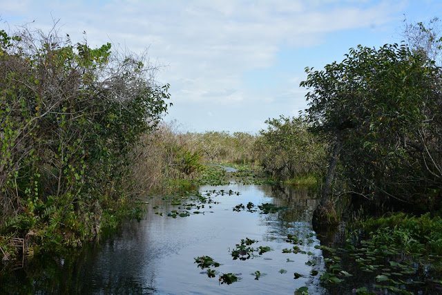 Everglades Rivers