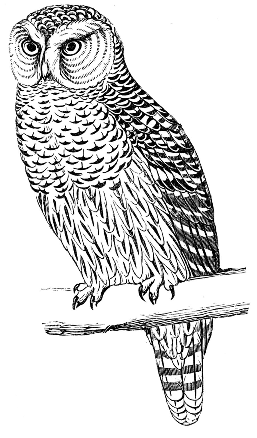 retro owl coloring pages | **FREE ViNTaGE DiGiTaL STaMPS**: Free Digital Stamp - Owl ...