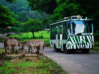 tips-berlibur-taman-safari.jpg