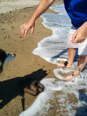 Keep your pets safe at the beach
